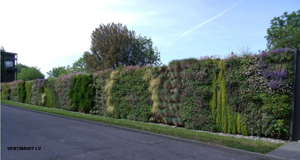 Mur Voirie Vertibruit Liaison Végétale LV
